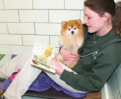 Staff reading story to dog