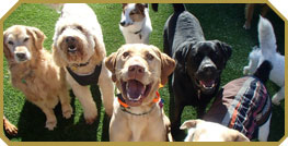 Group of dogs smiling into the camera