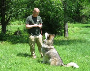 Dog trainer working with a husky
