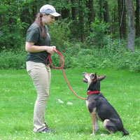 Puppy learning with dog trainer