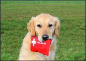 pet first aid fact sheet