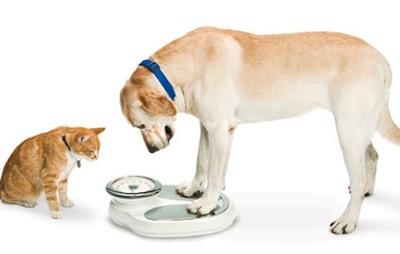 7 weird cat behaviors explained
