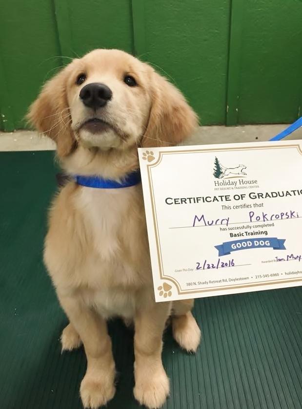 Drop The Leash Dog Training