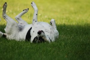 prevent Lyme disease in dogs