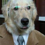 dogs love jobs