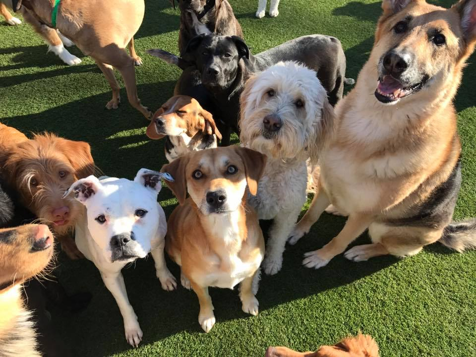 Group of dogs looking at the camera