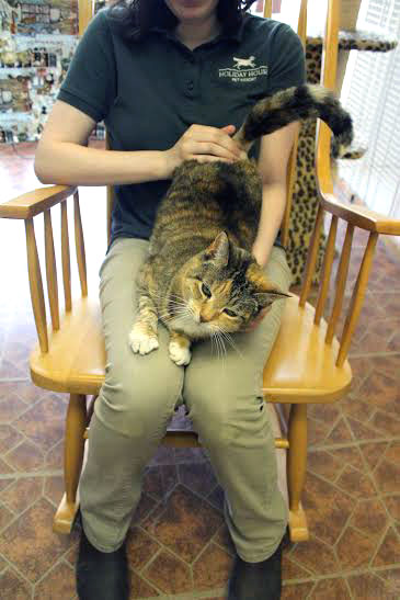 Cat being snuggled on a lap