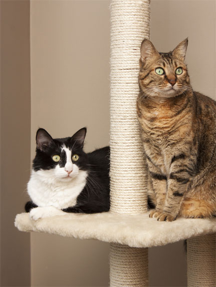Two cats sitting on a cat tree