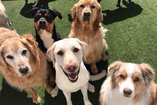 Dogs sitting and smiling at the camera