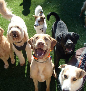 Group of dogs sitting and smiling