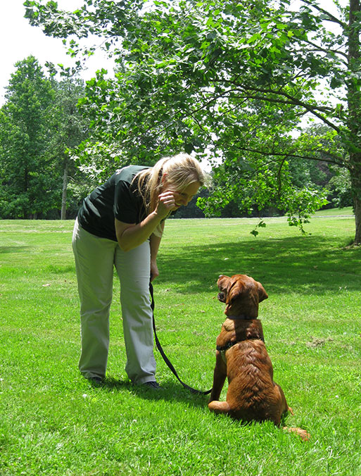 Play and Learn Dog Training