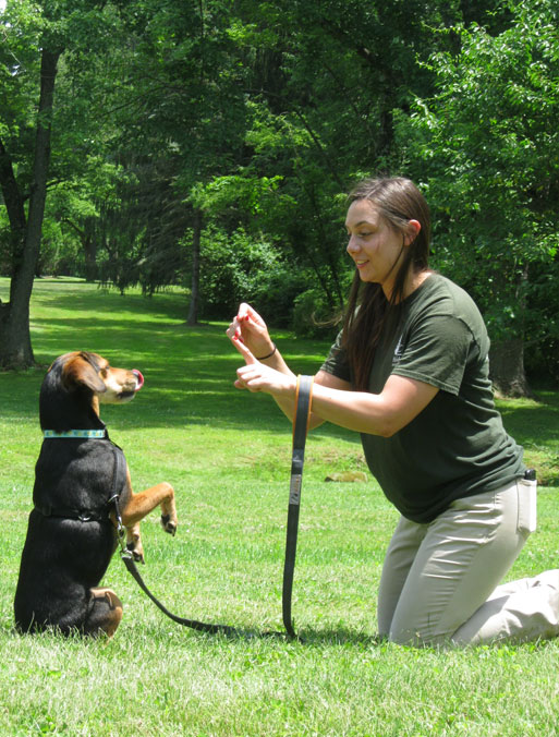 Training a dog to stand