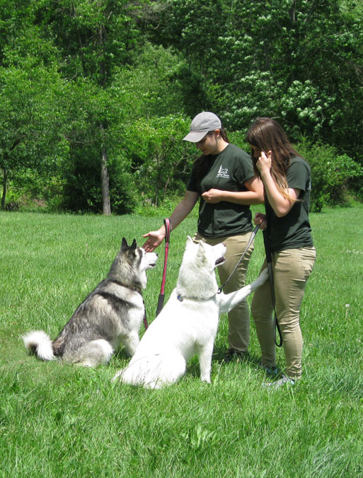 Two dogs in group dog training