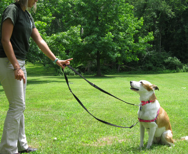 Training a dog on a leash to stay