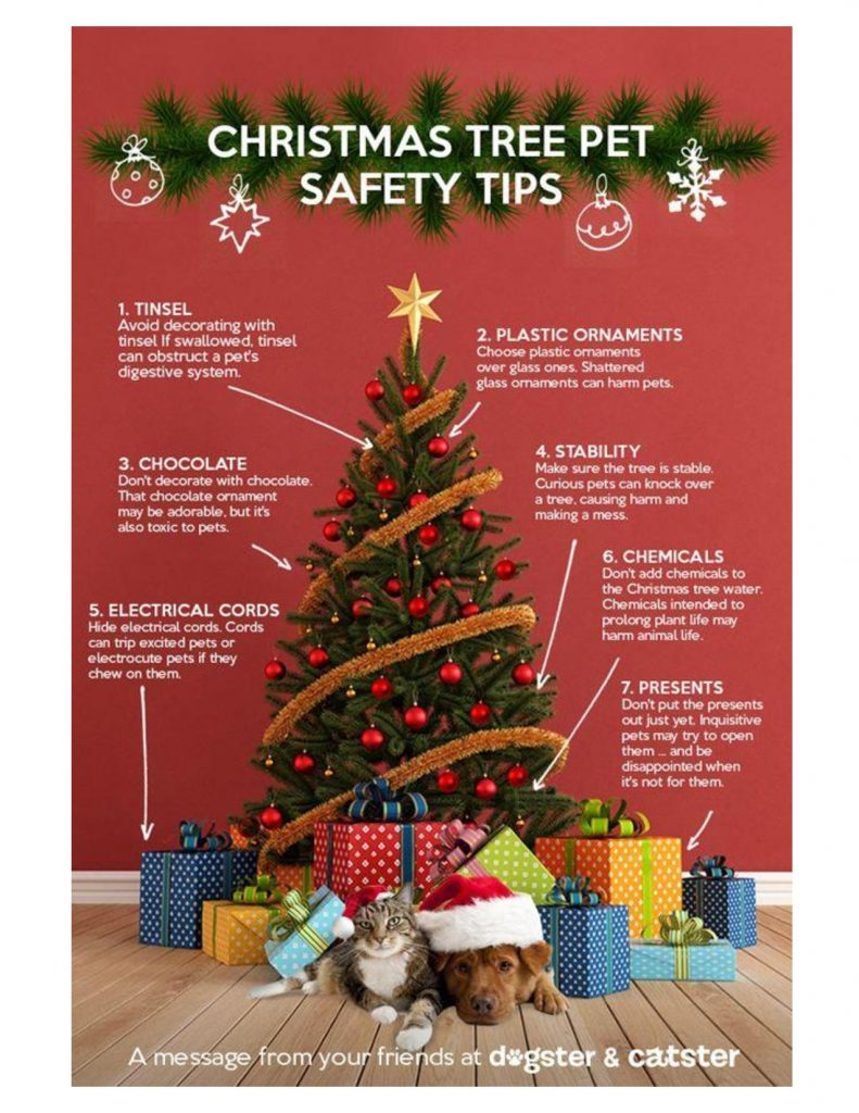 Christmas Tree Pet Safety Tips | Holiday House Pet Resort