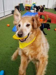 dog daycare program