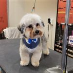 groomers help resolve troubling skin conditions