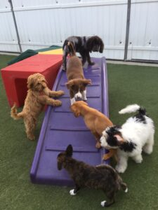 Puppy socialization can help avoid dealing with separation anxiety later