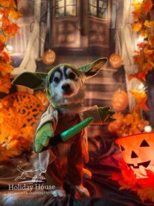 Holiday House Pet Resort Dog Daycare