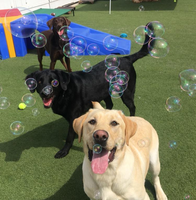 040919 Bubbles D