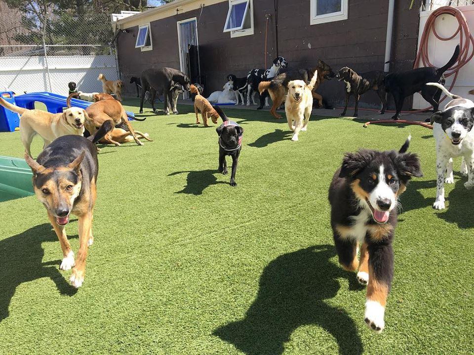 premium dog daycare program