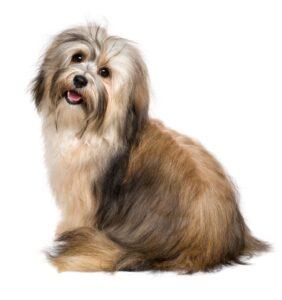 pet grooming treatments