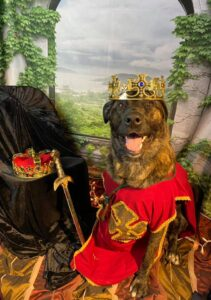 Dog Prom