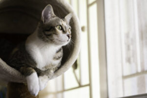 cat friendly lodging