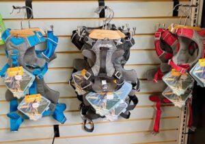 choosing a dog collar or harness